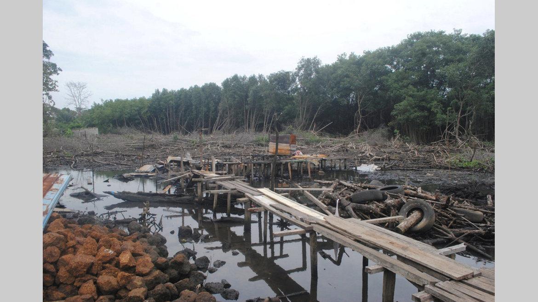 Protection et gestion des écosystèmes : L'ANUTTC traque les destructeurs de mangroves