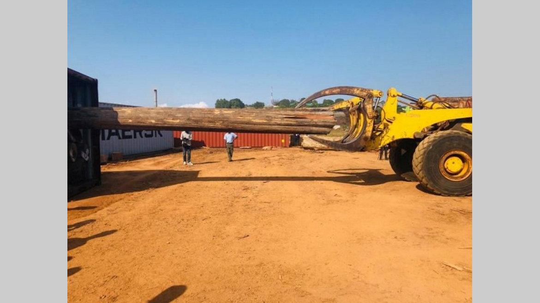 Secteur bois : Le Gabon importe du teck
