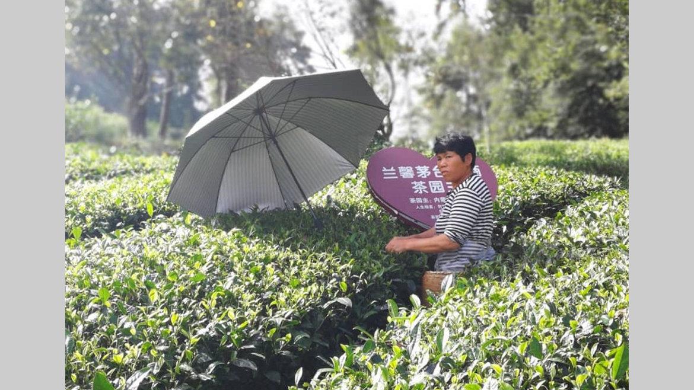 9h Guizhou : Sur les pistes rurales du thé