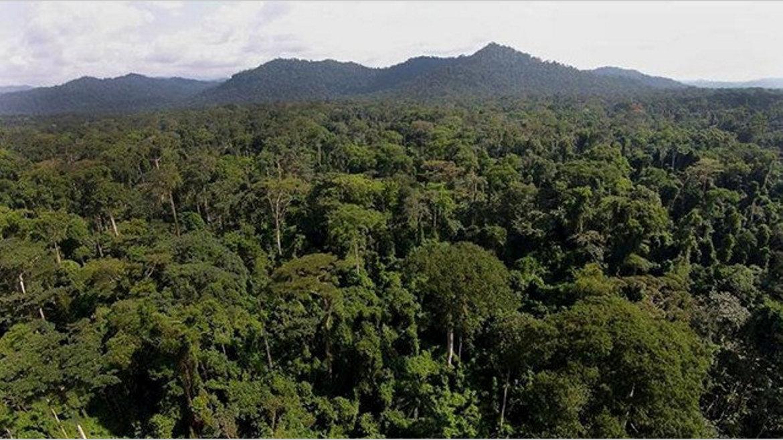 Forêts tropicales : L'alerte de Lee White