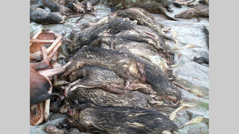 Fermeture de la chasse : trois espèces exemptées