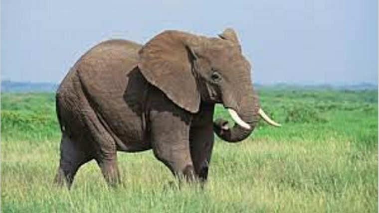 Conflit homme-faune : Mûrir la réflexion
