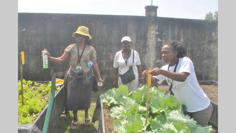 FAO : Promouvoir une agriculture saine et durable