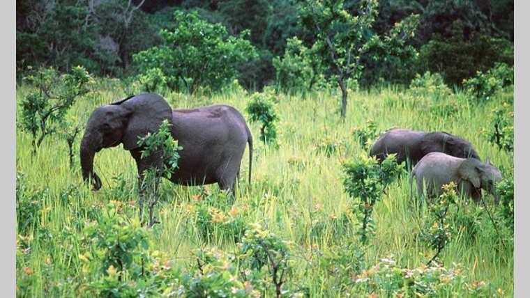 Biodiversité : le Gabon, un éden avecses 23,7 millions d'hectares de forêt