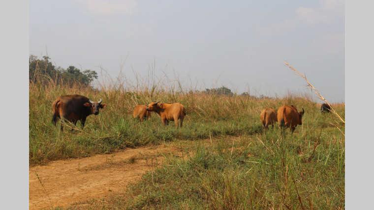 Tourisme : Vers la réouverture du parc de Lekedi
