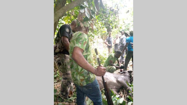 Lambaréné : Unbuffle charge mortellellement une septuagénaire