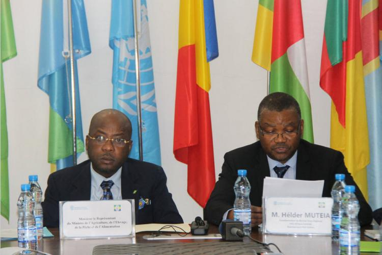 FAO : Accroître les synergies entre acteurs