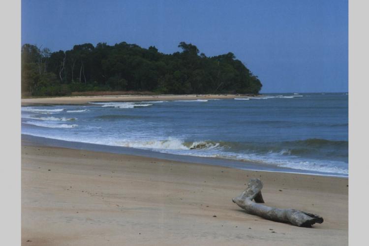Evaluation des stocks halieutiques du Gabon : L'Espagne va dépêcher une nouvelle mission