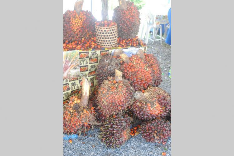 Filière palmier à l'huile : Identifier les acteurs impliqués dans le développement du secteur