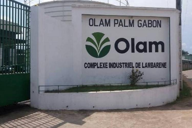 Conservation : Olam Palm Gabon primée à l'international