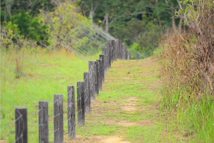 Conflit homme-faune : Le CESE face au désarroi des agriculteurs