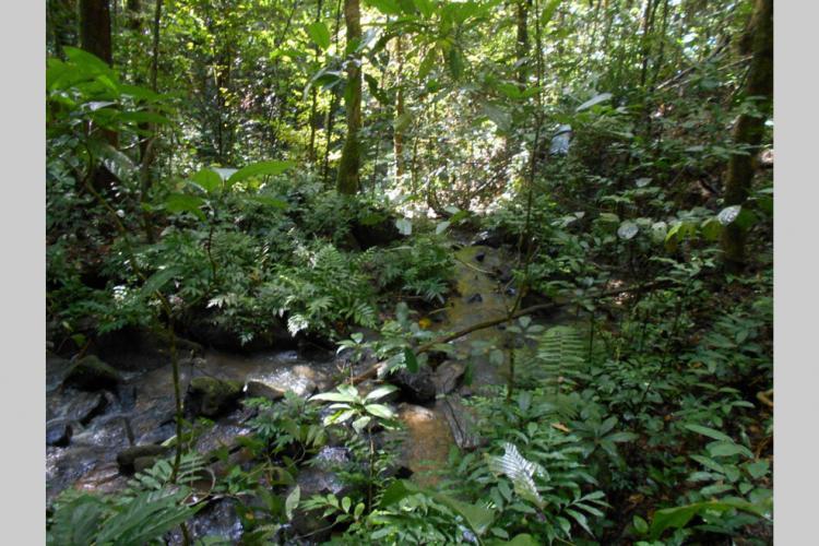 : L'incroyable potentiel des forêts tropicales