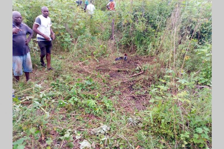Makokou : un éléphant sème la terreur au quartier Mbolo-II