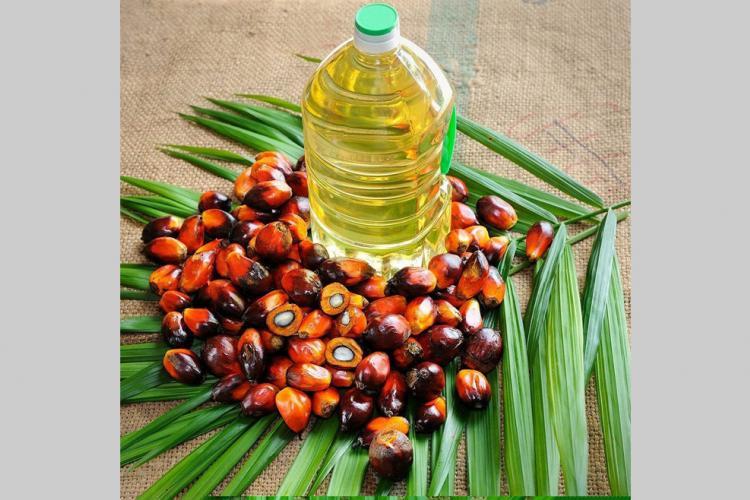 Huile de palme : Olam Palm Gabon Lambarénécertifiée ISO 22000