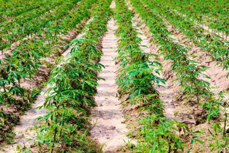 Agriculture : vers la création de 5 agropoles