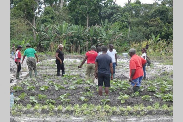 Agriculture : IDRC Africa forme des jeunes de la JCI
