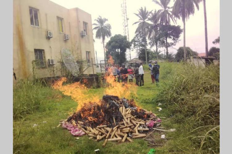 Oyem : plusieurs lots de chanvre indien détruits
