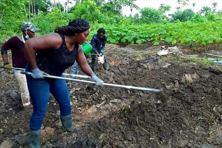 """Agriculture : l'apport de la coopérative """"Reflet du Gabon"""""""