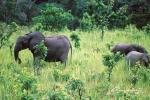 Journée mondiale des éléphants : Stop aux massacres des pachydermes!