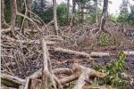 Destruction de la mangrove àAkanda : les auteurs interpellés