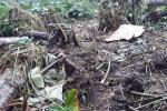 Conflit homme-faune : des plantations dévastées dans la Louetsi-Wano
