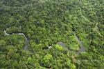 Le Gabon récompensé pour la sauvegarde de ses forêts